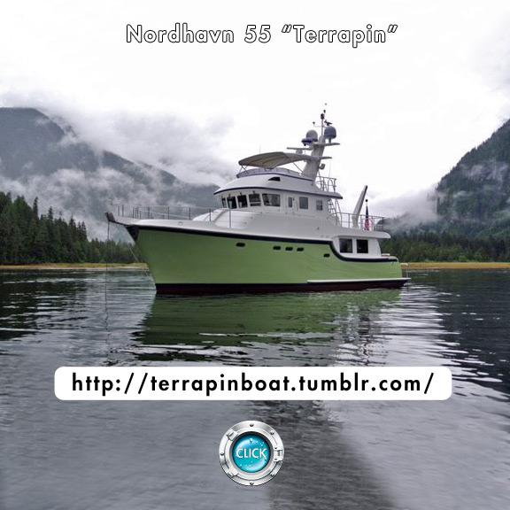 Terrapin Blog